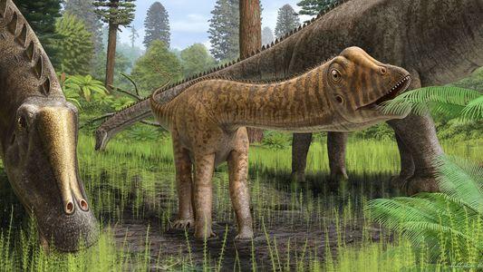 """Encuentran fósil de un dinosaurio joven de cuello largo al que apodan """"Andrew"""""""