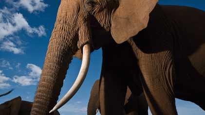 Magníficas imágenes de elefantes