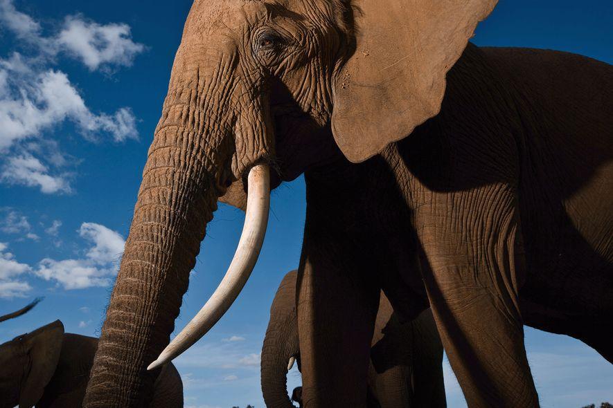 Los elefantes son altamente sociales y forman grupos familiares cerrados. Aquí, una familia disfruta de un ...