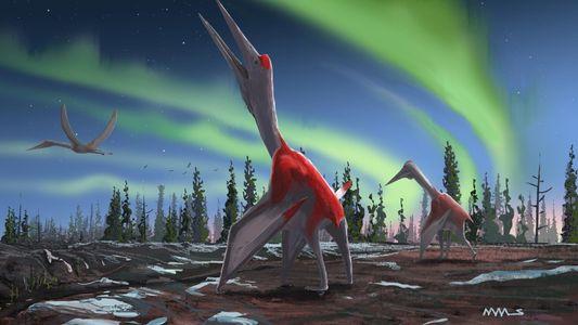 """Identifican a un nuevo pterosaurio: el """"dragón congelado de los vientos del norte"""""""