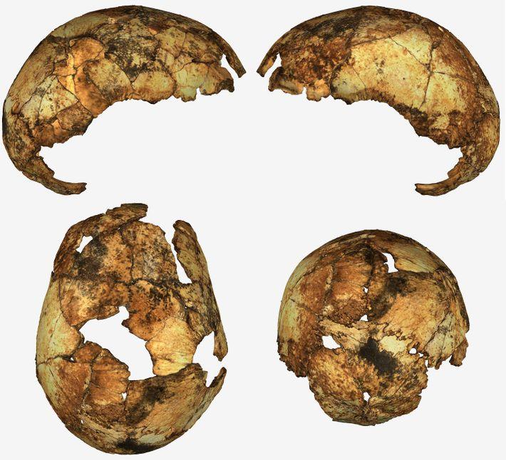 Se descubrieron fragmentos de cráneo de un individuo temprano de Homo erectus en Sudáfrica, la primera ...
