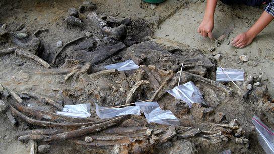 Los investigadores encontraron un sitio de 700 mil años de antigüedad en la isla filipina de ...