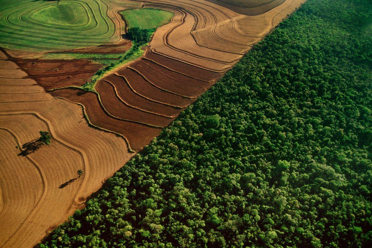 Tierras de cultivo bordean el hábitat de la selva tropical en el Parque Nacional Iguazú, en ...
