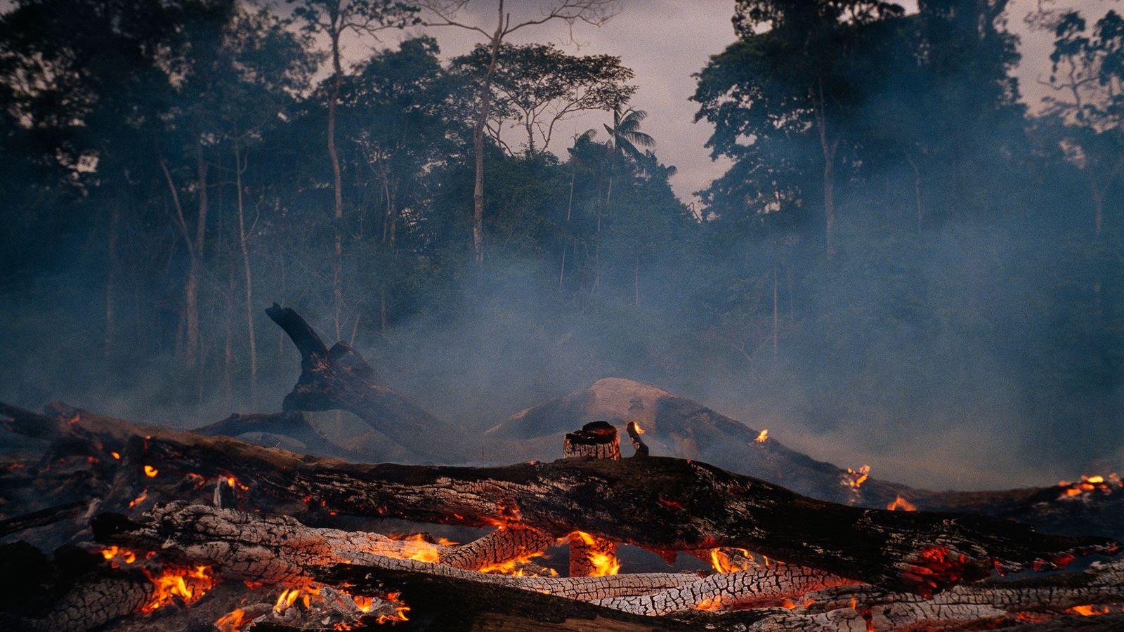 En los últimos años, el ritmo en el que se está despejando la selva en la ...