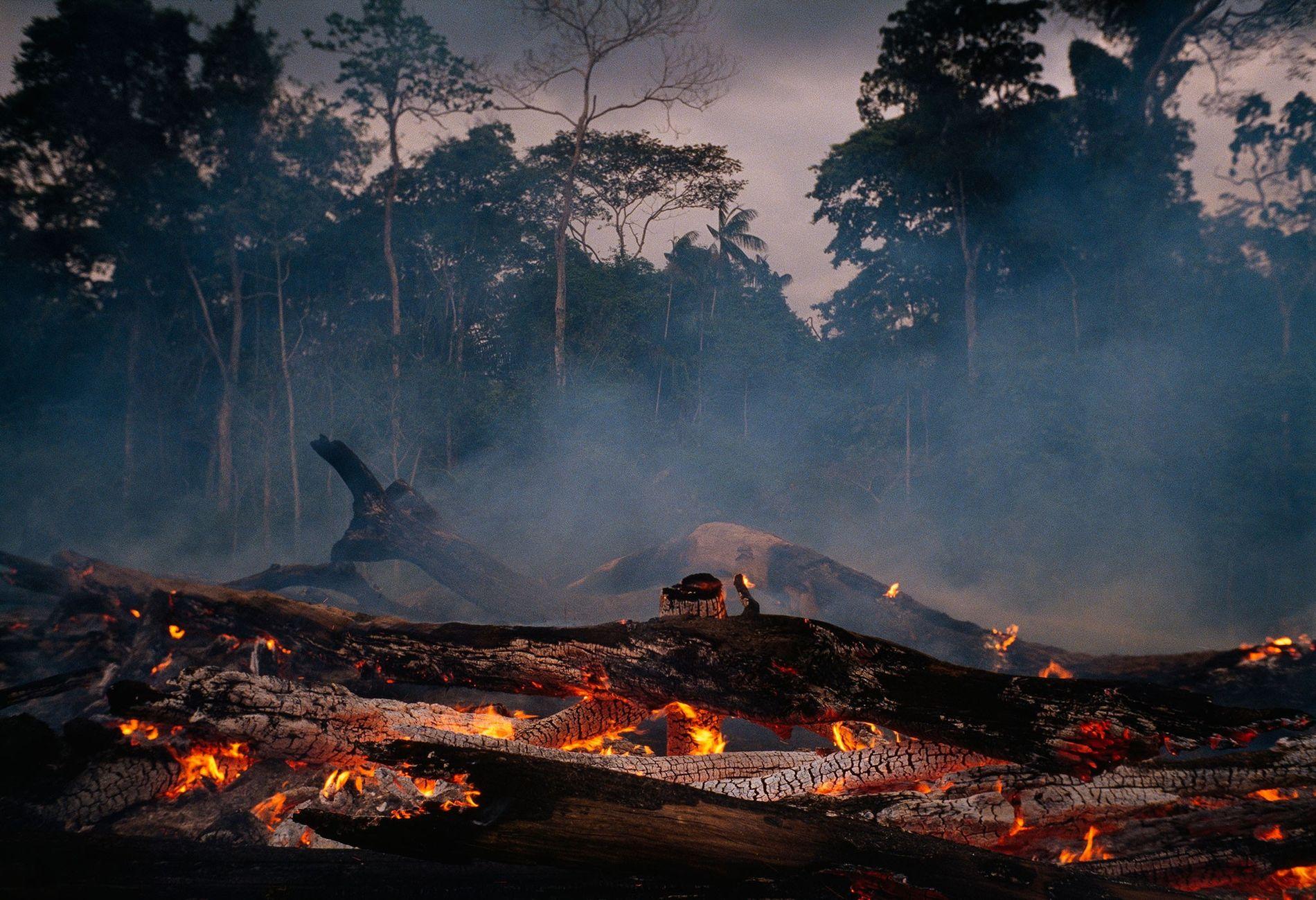 En los últimos años, el ritmo en el que se está despejando la selva en la Amazonía brasileña ha aumentado; y, se espera que, durante el mandato del nuevo presidente, Jair Bolsonaro, se acelere aún más.  Es usual que el bosque se queme para despejarlo y que la tierra se use para el pastoreo o la agricultura.