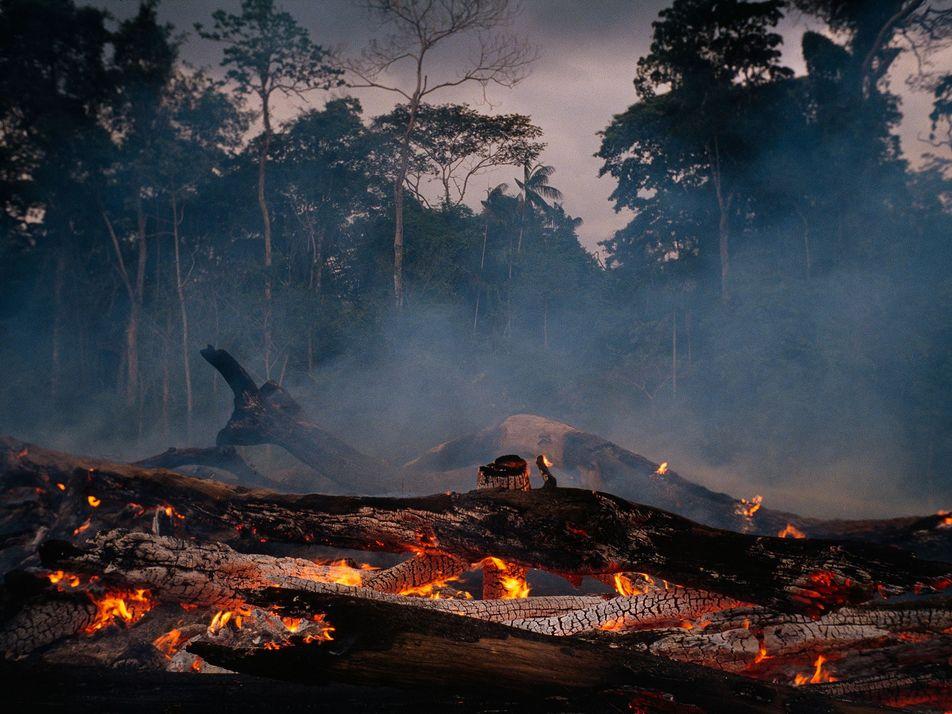 Cómo la pérdida de la Amazonía podría afectar al clima y al abastecimiento de agua en ...