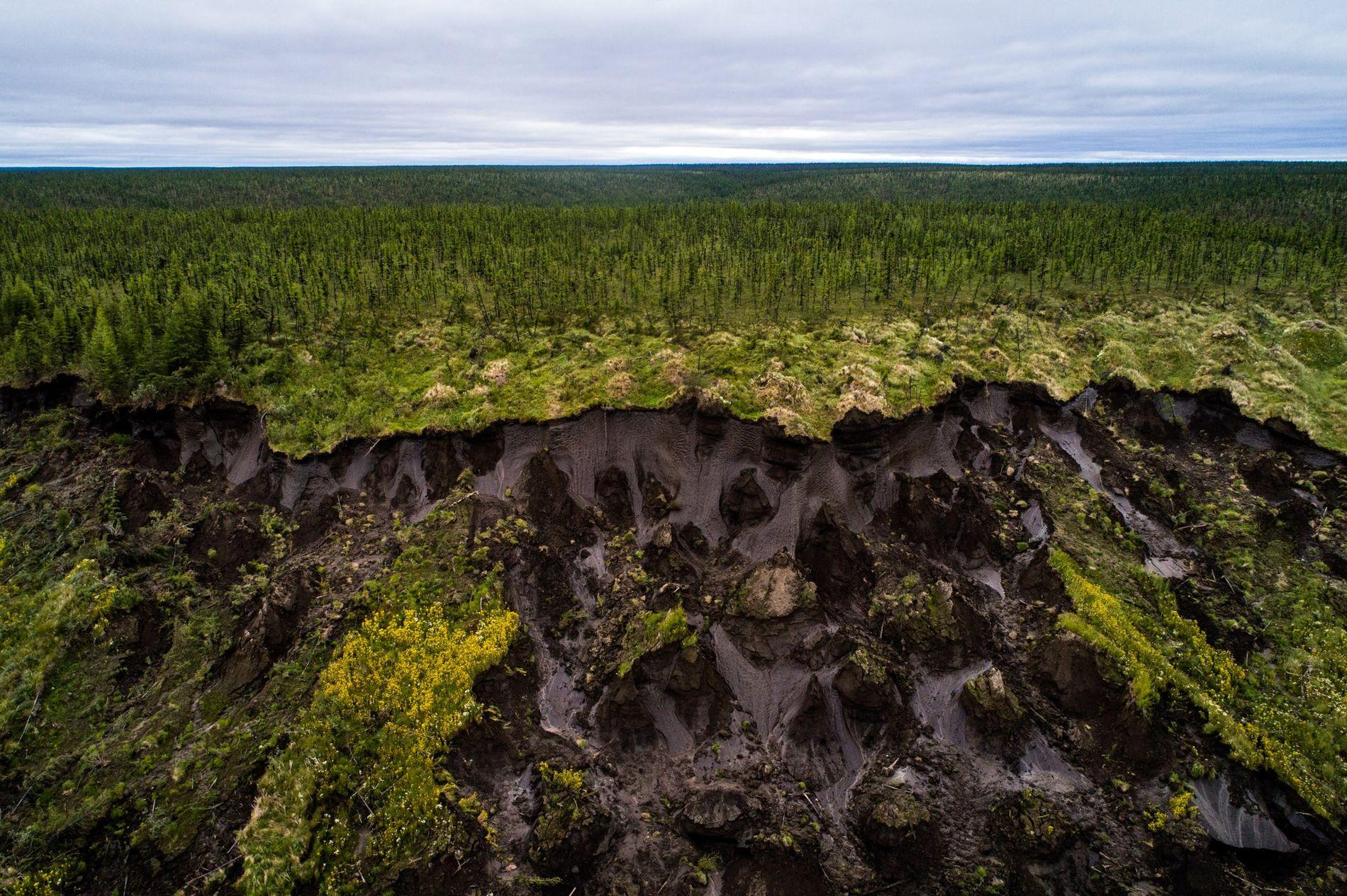 El suelo colapsa en Duvanny Yar, un inmenso cráter con permahielo junto al Río Kolimá en ...