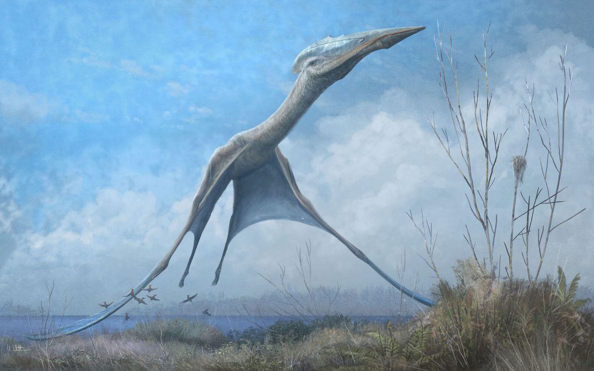 Descubren restos fósiles de un pterosaurio antártico entre los escombros del incendio del Museo Nacional de ...
