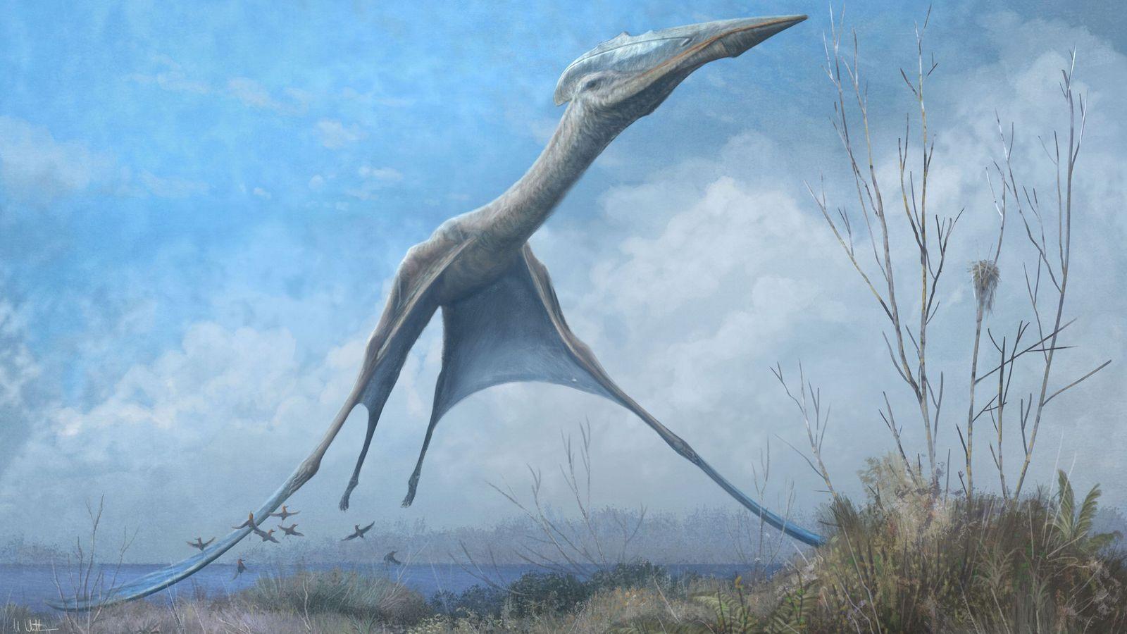 Un pterosaurio azdárquido toma vuelo en Romainia en una ilustración. Los fósiles recuperados del Museo Nacional ...