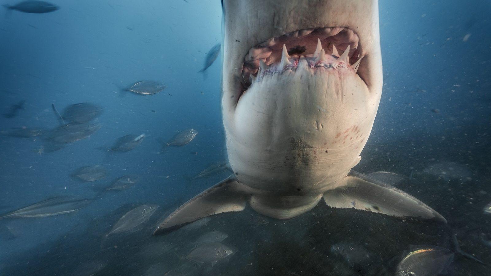 01_shark