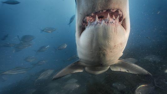 ¿Por qué le tenemos miedo a los tiburones? Existe una explicación científica