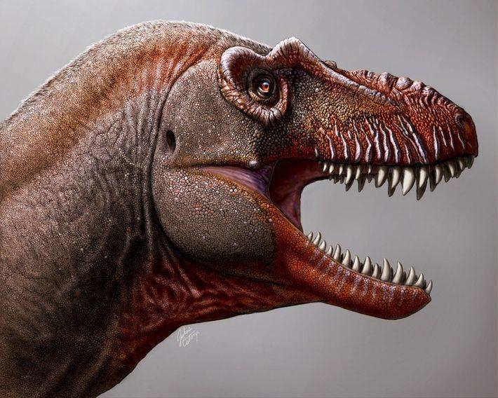 Para el ojo inexperto, muchos tiranosaurios parecen idénticos. Pero el Thanatotheristes posee varios rasgos que lo ...