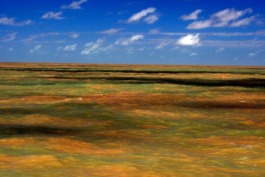 Los científicos estaban particularmente sorprendidos de encontrar el arrecife en una región dominada por agua cenagosa ...