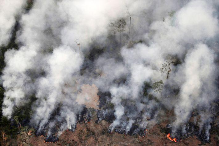 El fuego arde en un área de la selva amazónica cerca de Porto Velho, en el ...