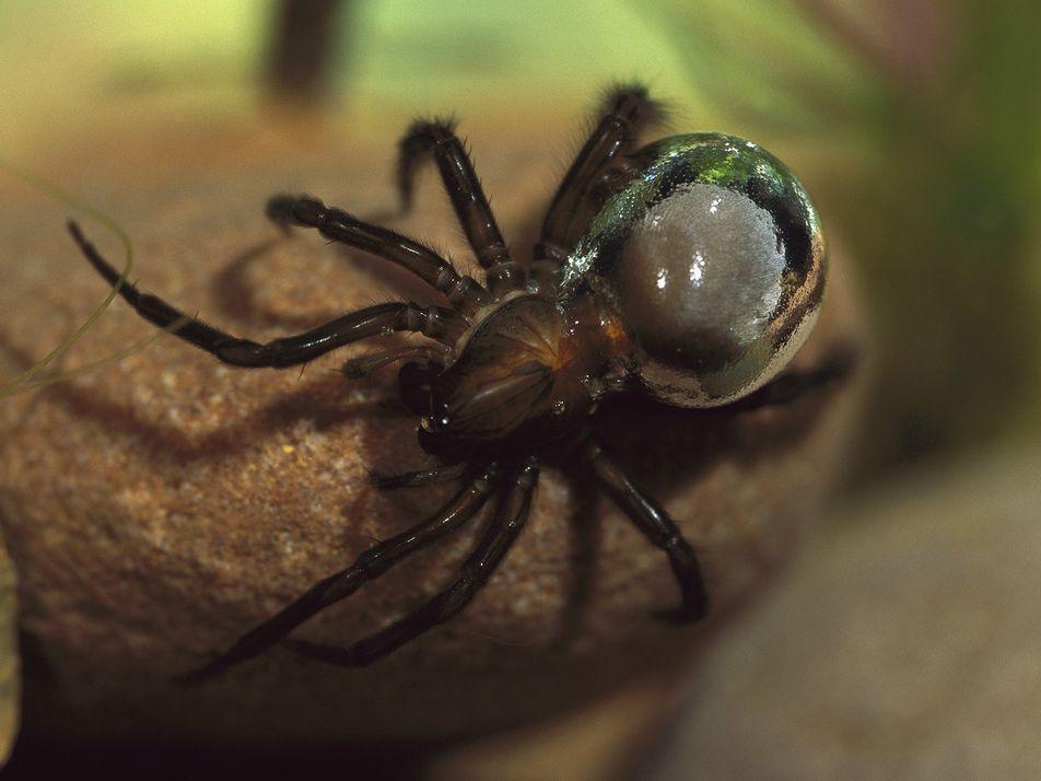 Algunos animales utilizan burbujas para su supervivencia. ¿Cómo lo hacen?