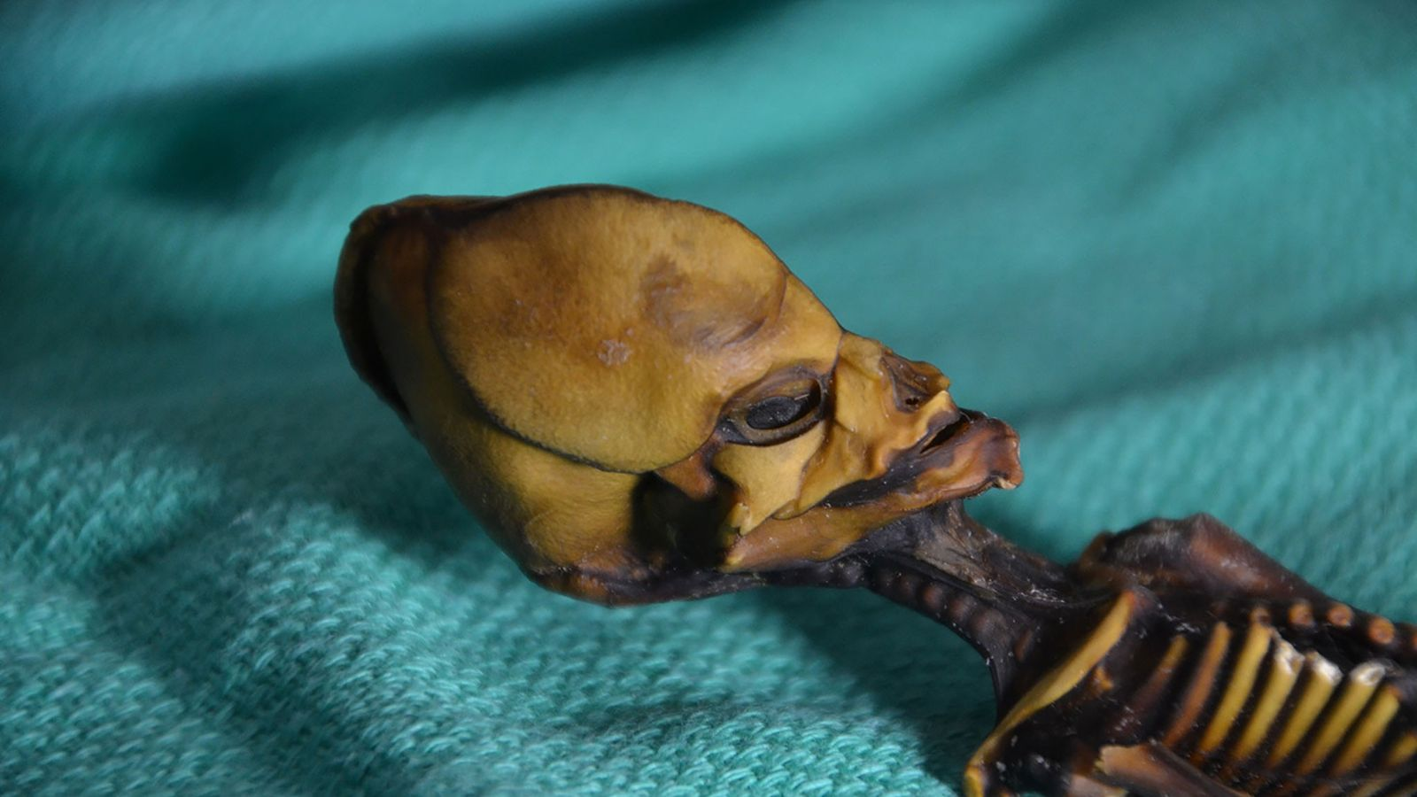 Ata, la momia de quince centímetros (seis pulgadas) encontrada en el desierto de Atacama de Chile.