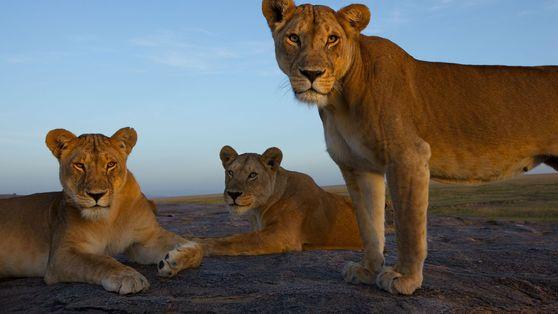Fotos de algunos de los animales más carismáticos