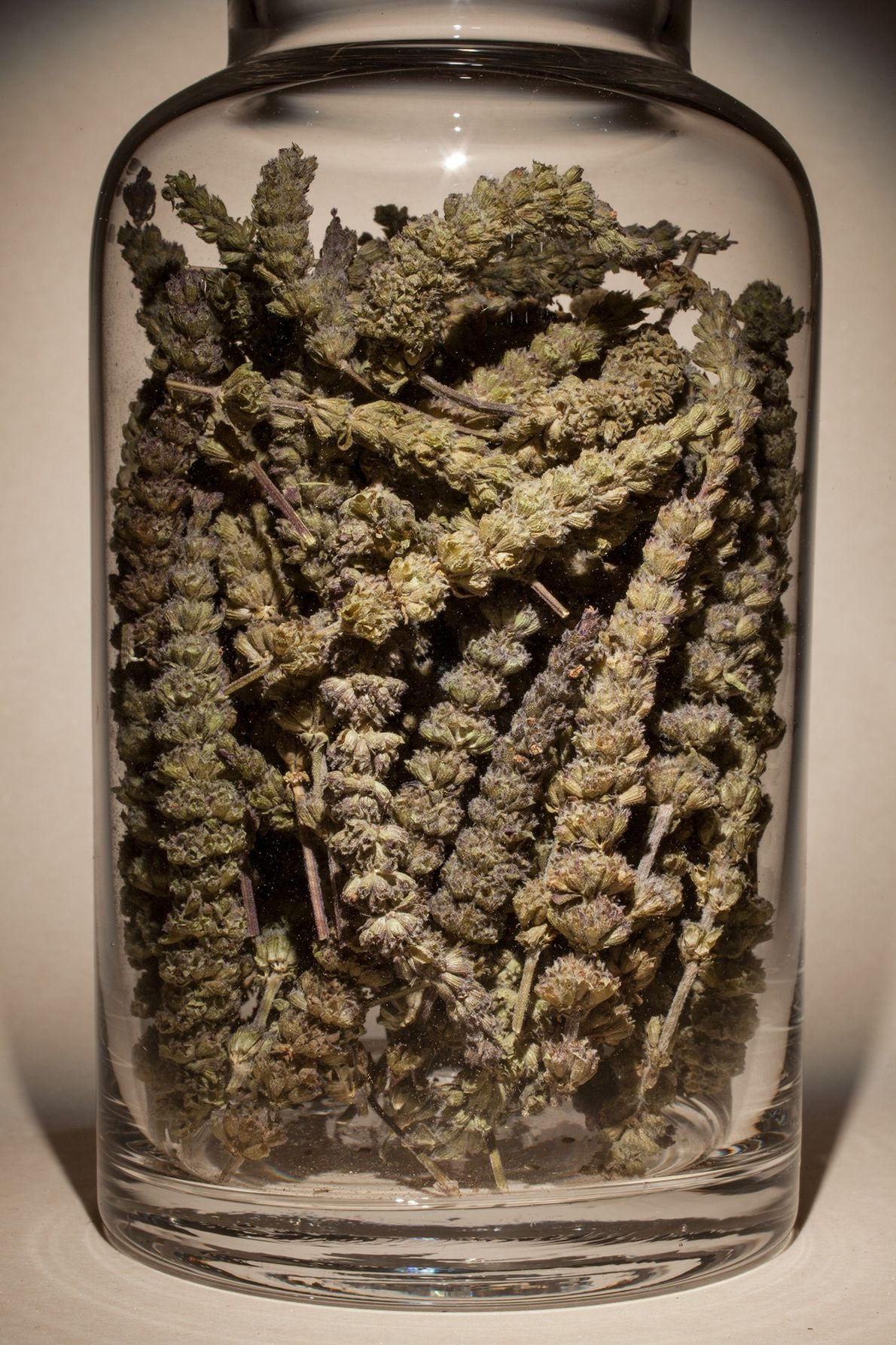 "Nombre común: espiga de Schizonepeta Latín: ""Schizonepeta tenuifolia"" Chino: Jing Jie Algunos usos: congestión nasal, garganta irritada."