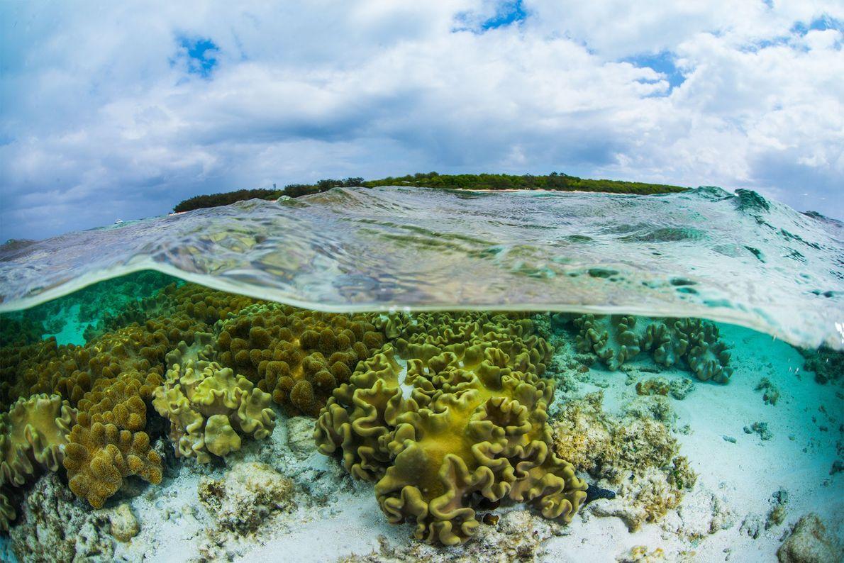 Corales en Heron Island, en la zona sur de la Gran Barrera de Coral.