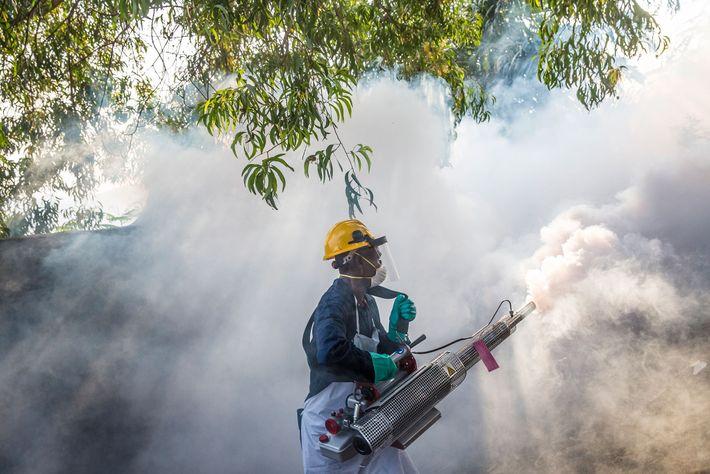 Un hombre rocía para matar al mosquito Aedes que porta el virus de la fiebre amarilla ...