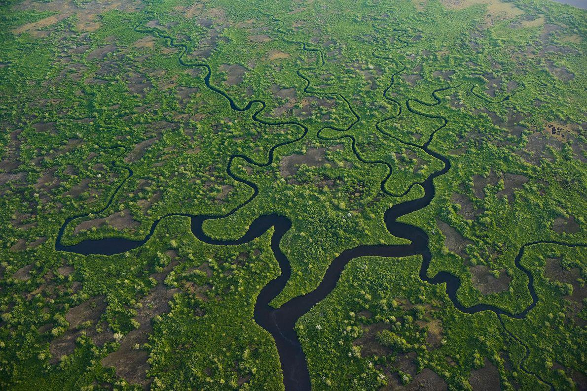 A medida que sube el nivel del mar, las aguas saladas del océano invaden los Everglades ...