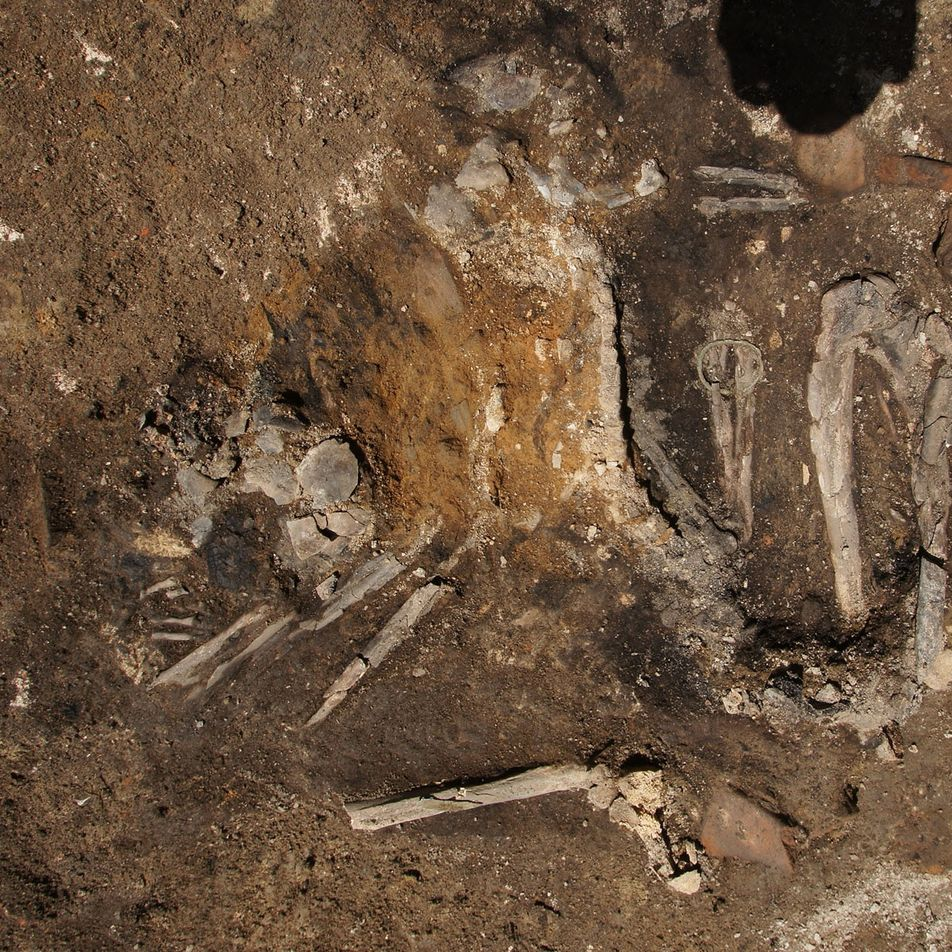 Encuentran esqueletos quemados que son restos de una antigua invasión goda
