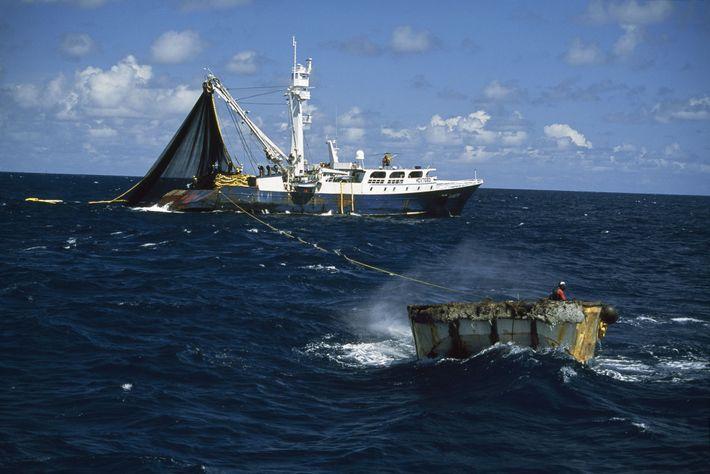 Este navío está pescando atún, una especie que, comúnmente, se pesca en alta mar.