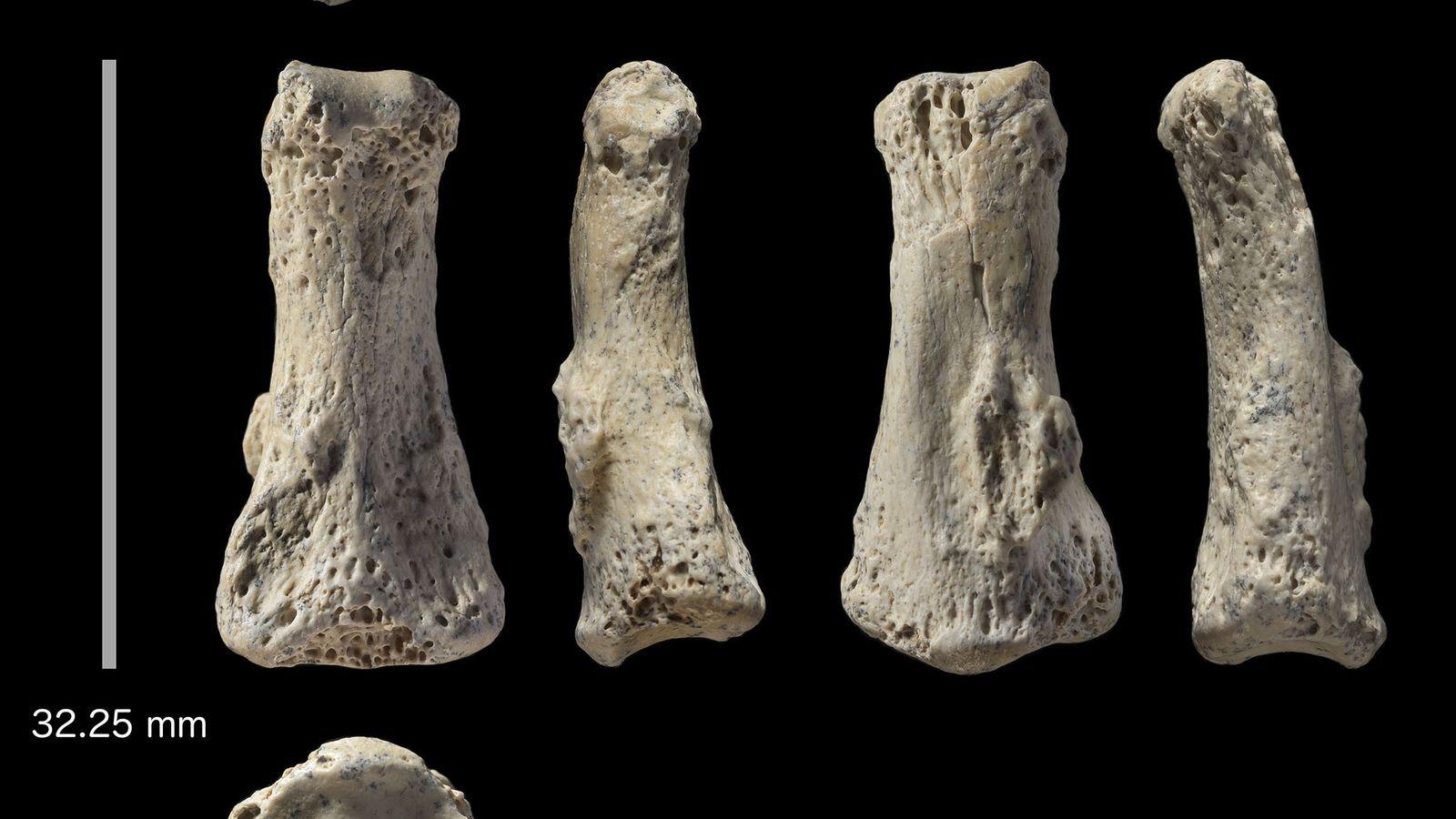 Los restos fósiles de un hueso de dedo de Homo sapiens hallado en Al Wusta al ...