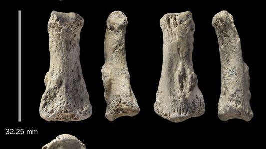 Un hueso de dedo de 88.000 años podría modificar fechas de migración humana