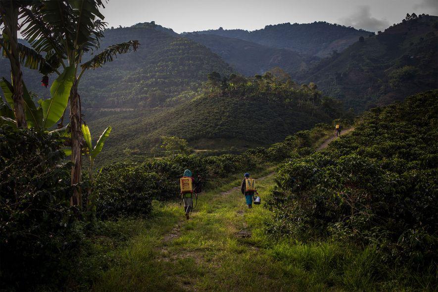 Yuliana y sus compañeras vuelven a sus residencias tras trabajar en los campos de café.