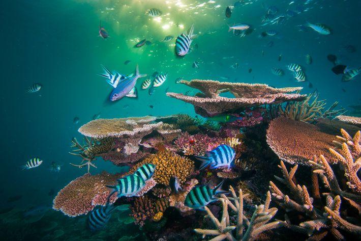 En 2008, el arrecife Opal en la Gran Barrera de Coral australiana rebosaba de vida. Sus ...