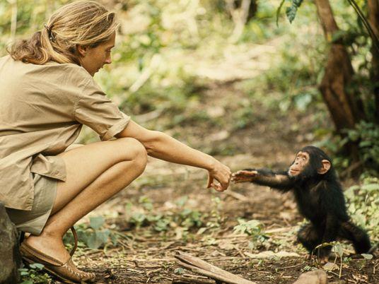 Jane Goodall: cómo una mujer redefinió la humanidad