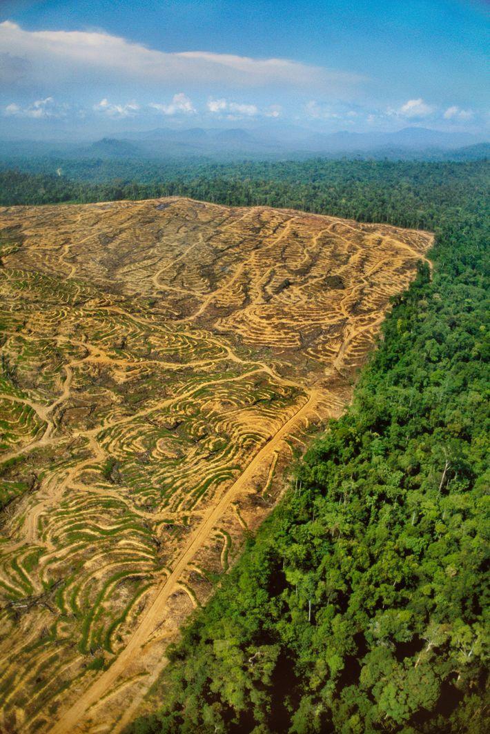 Las marcas de la explotación forestal deterioran la selva tropical de Borneo.