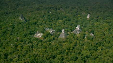 Imagen superior de la selva guatemalteca.