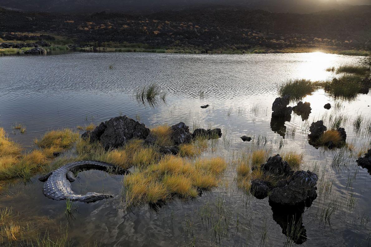 En el lago Turkana se encuentra la colonia de cocodrilos del Nilo más grande del mundo.