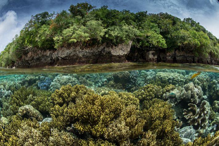 En una expedición a mares prístinos en Palau, el equipo encontró que tanto la tierra como ...