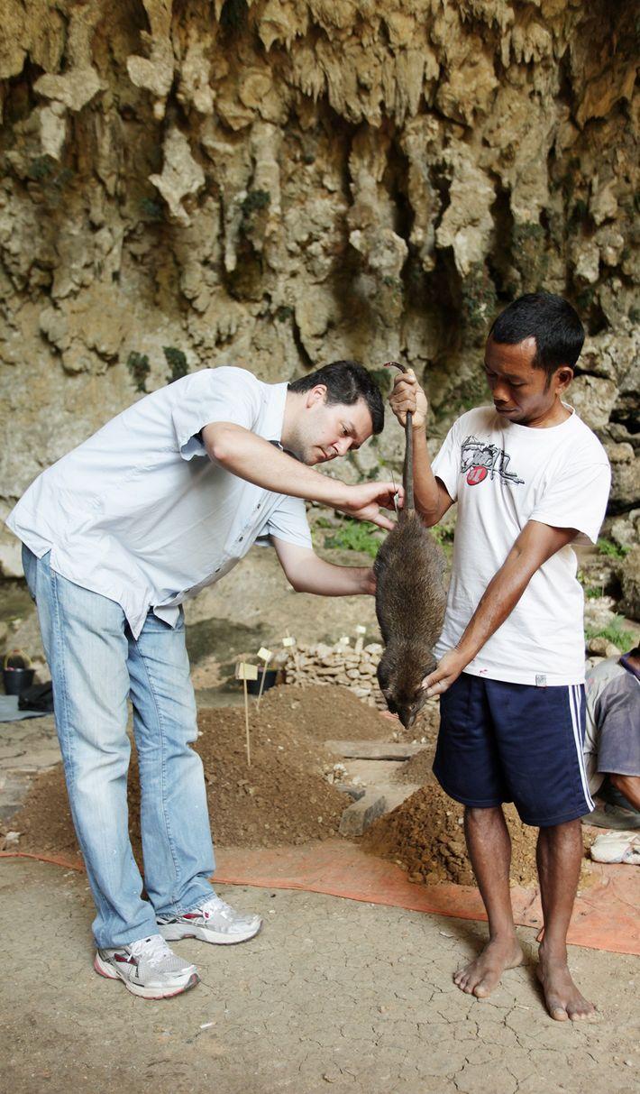 Matthew Tocheri (izquierda) y Bonefasius Sagut miden una rata gigante moderna en Liang Bua.