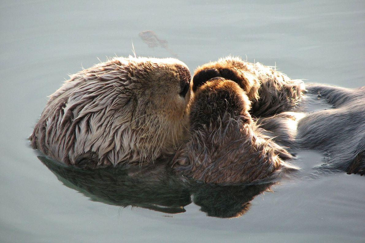 """""""Descubrí a esta pequeñaja dormitando en el muelle en Valdez, Alaska. Parecía ajena a todo lo ..."""