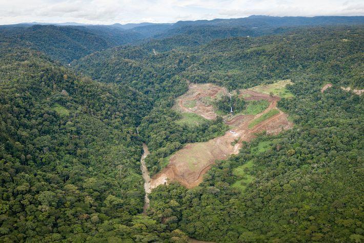 En los terrenos de la Selva de Batang-Toru, en Sumatra, ya ha comenzado la deforestación para ...