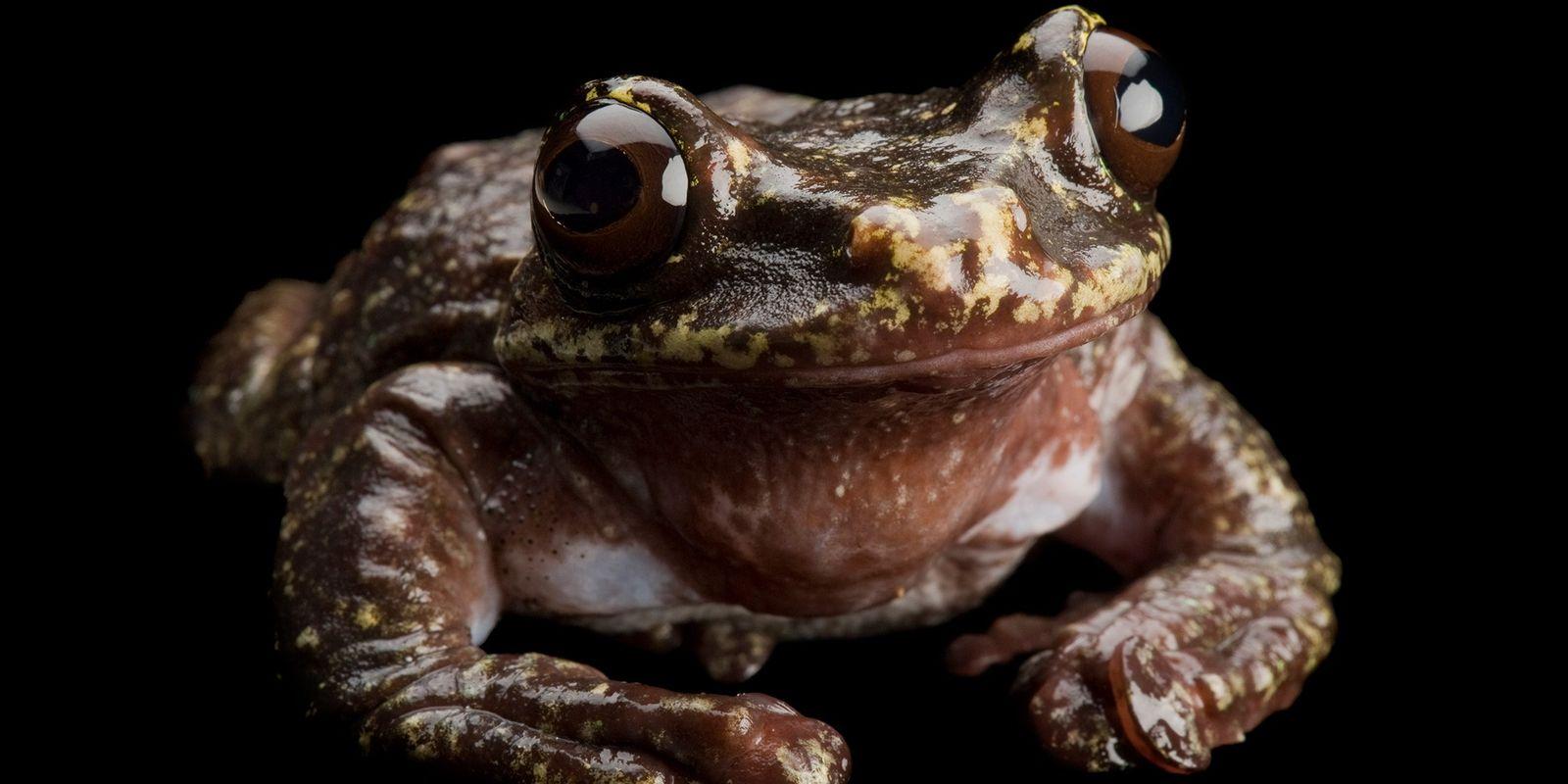 Primeras especies de mamíferos reconocidas como extintas debido al cambio climático