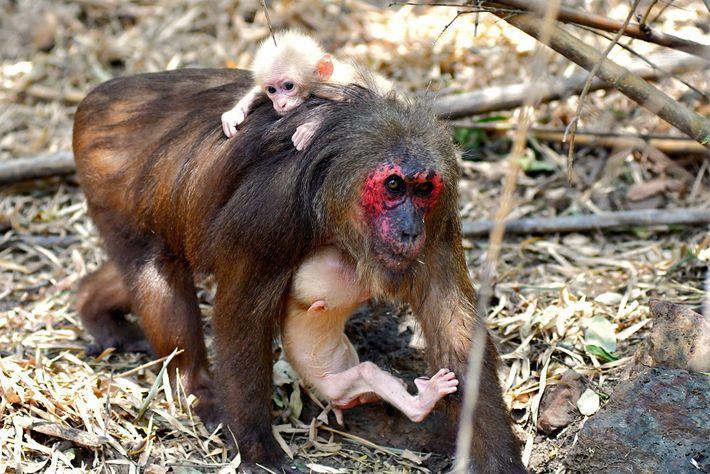 La madre de los mellizos lleva a un bebé en sus brazos mientras que el otro ...