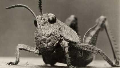 Fotos de insectos y arañas