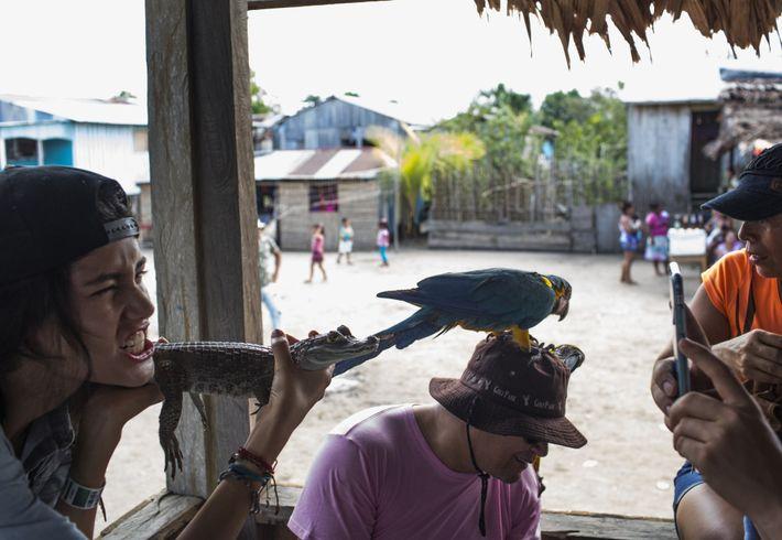 Unos turistas posan para sacarse fotos con un caimán y un guacamayo en Puerto Alegría, Perú. ...