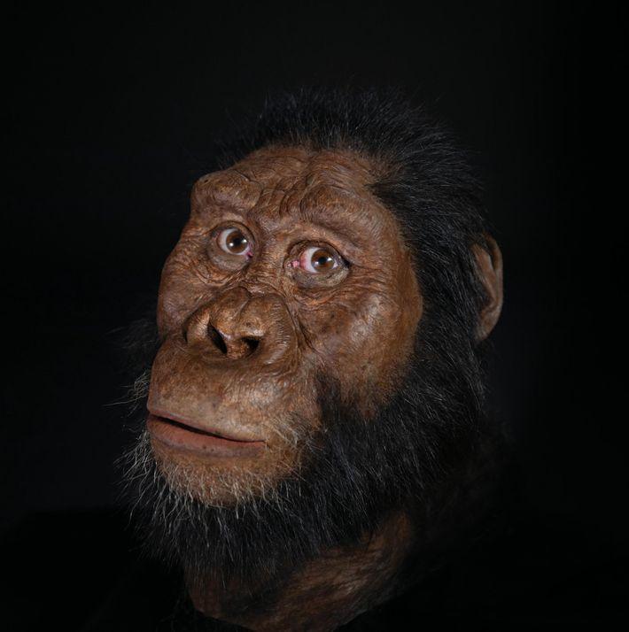El paleoartista John Gurche reconstruyó la cara del A. ananmensis, creando escaneos del cráneo recién descubierto.