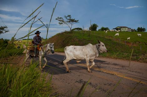 La selva amazónica de Brasil en la mira