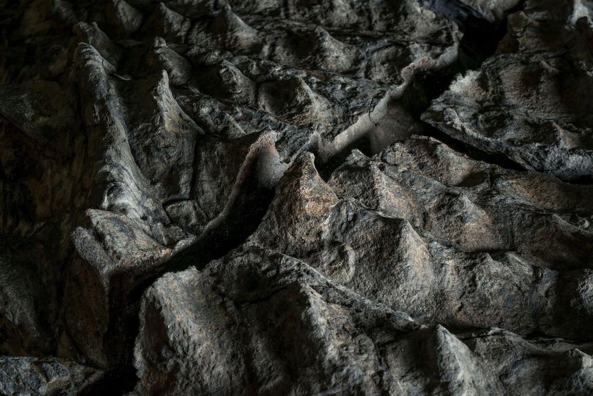 """Esta imagen muestra la armadura ósea de un anquilosaurio denominado """"Borealopelta markmitchelli""""; las partes menos densas ..."""