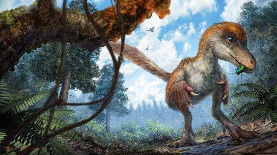 Un pequeño celurosaurio, un dinosaurio con cola de plumas que vivió hace 99 millones de años, ...