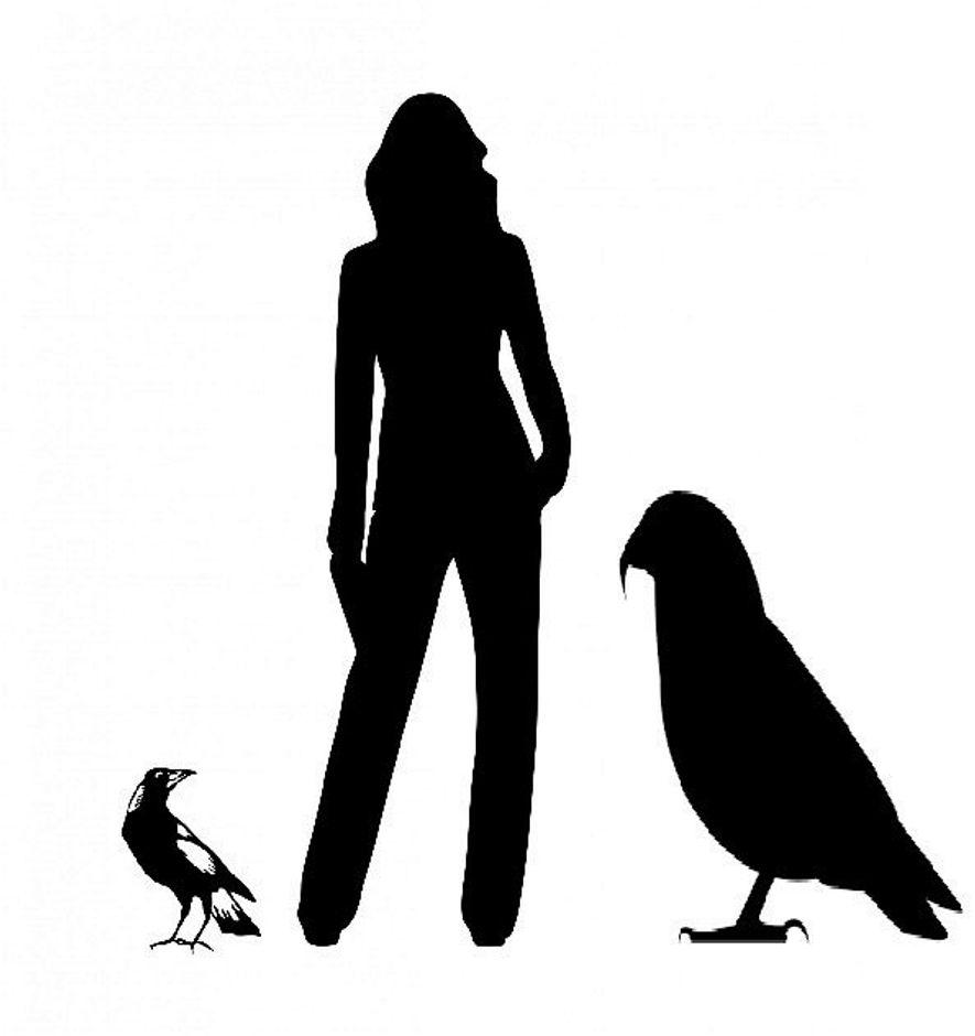 Siluetas de una urraca, un humano adulto, y el loro gigante Heracles inexpectatus, en orden.