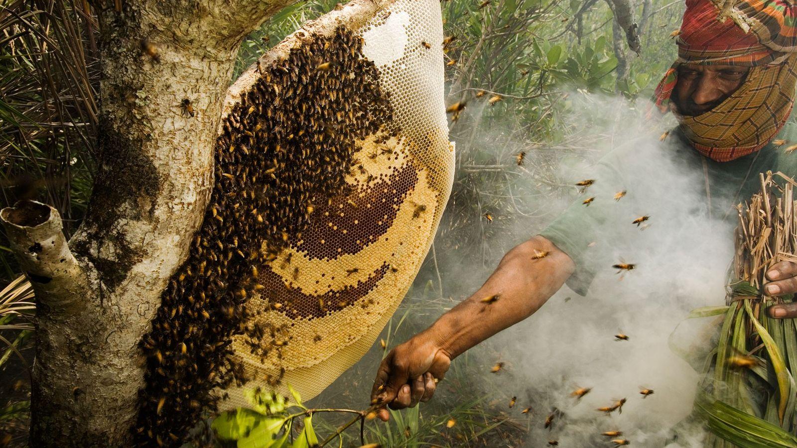 Cazadores de miel