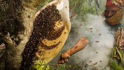 10 dulces fotos de abejas